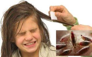 Причины педикулеза и способы быстро избавиться от вшей