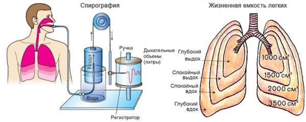 Процесс проведения спирографии